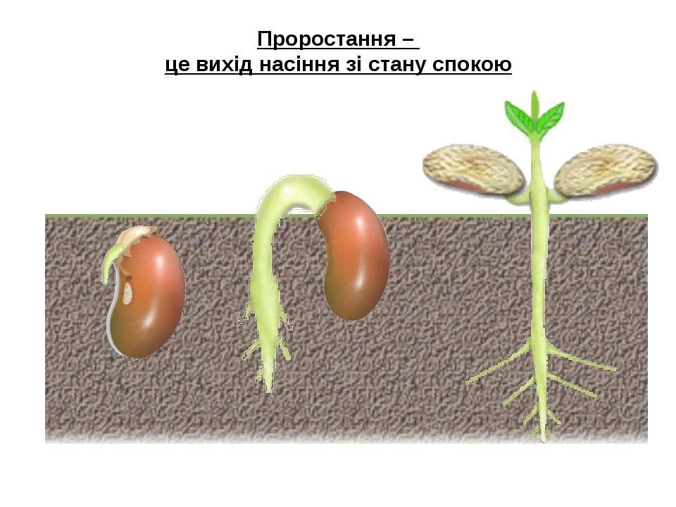 Проростання – це вихід насіння зі стану спокою Итак, мы с тобой узнали, как в...