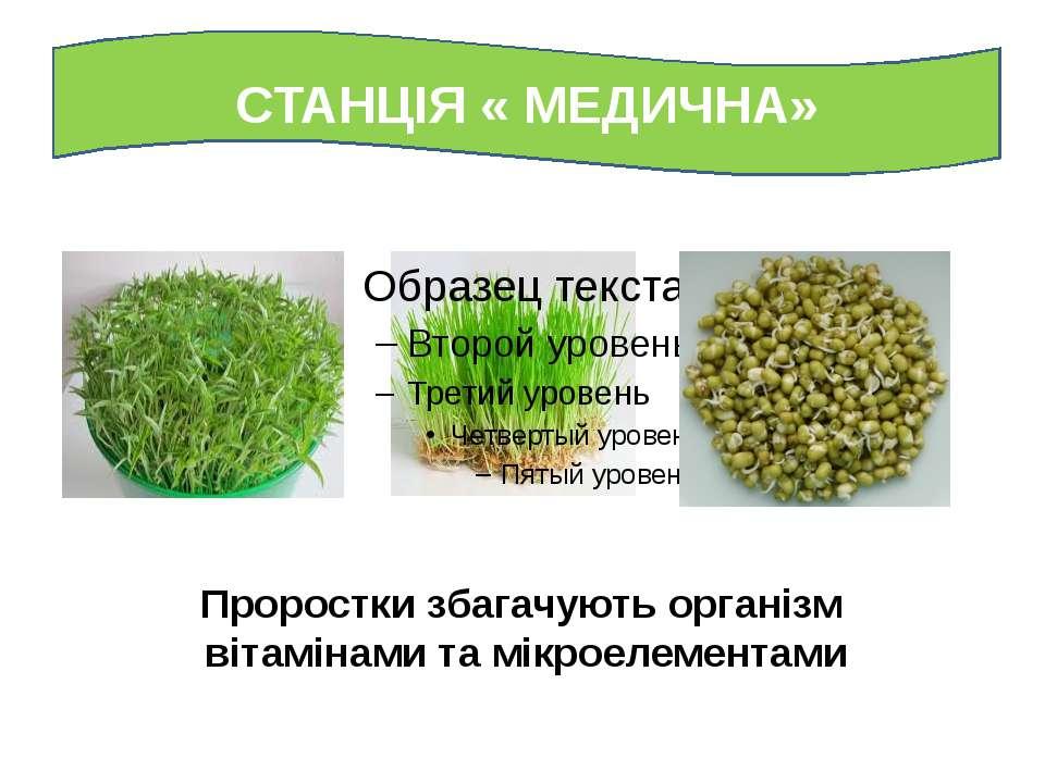 СТАНЦІЯ « МЕДИЧНА» Проростки збагачують організм вітамінами та мікроелементами