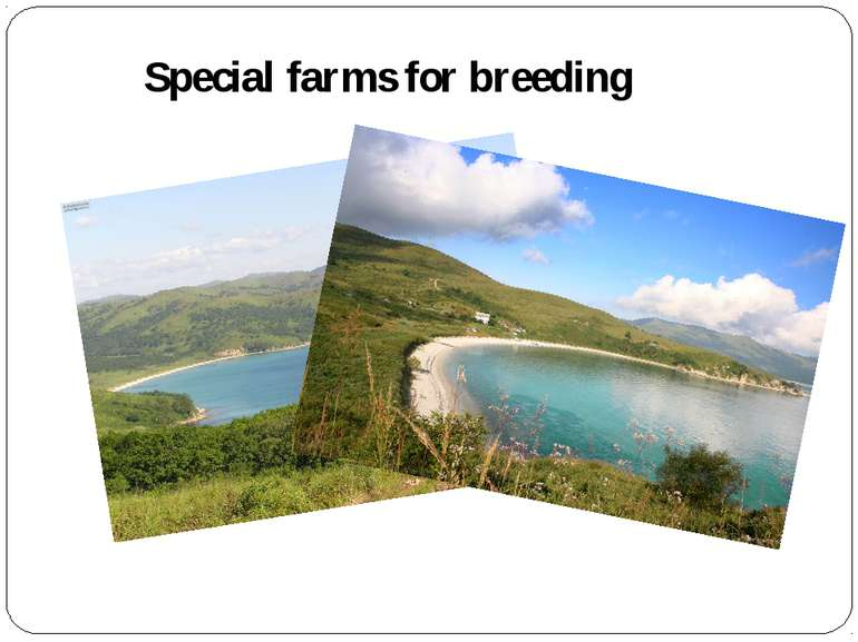 Special farms for breeding