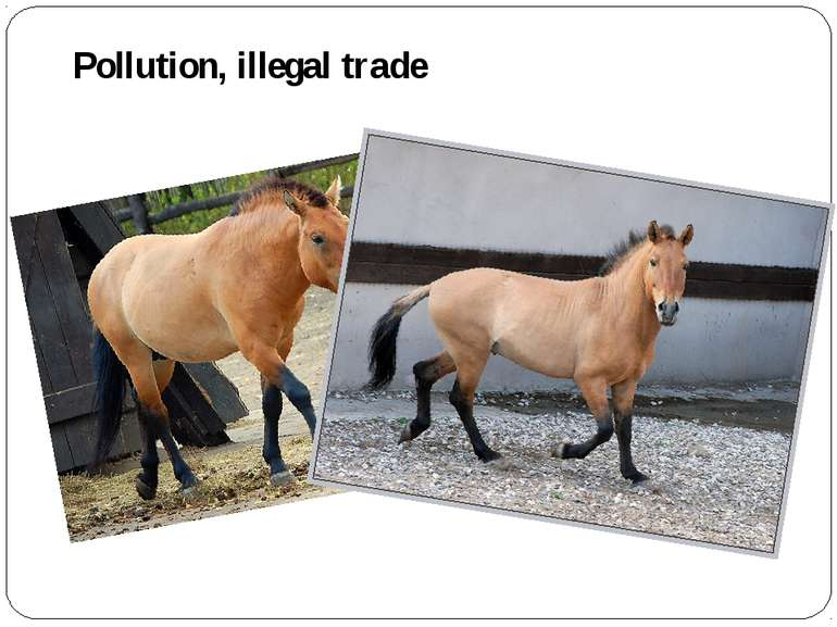 Pollution, illegal trade