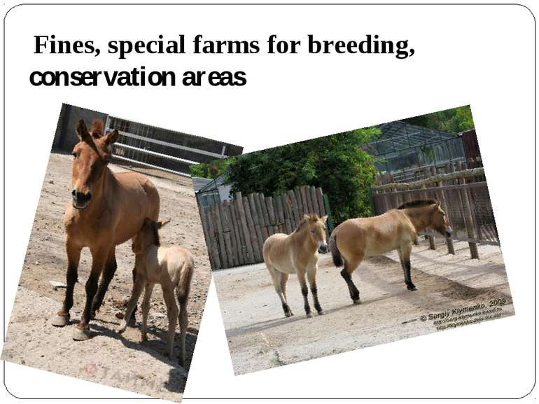 Fines, special farms for breeding, conservation areas