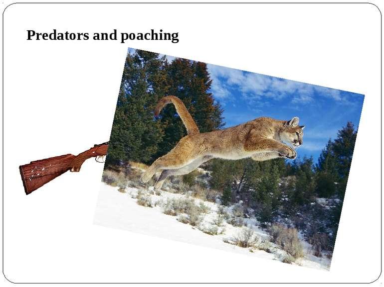 Predators and poaching
