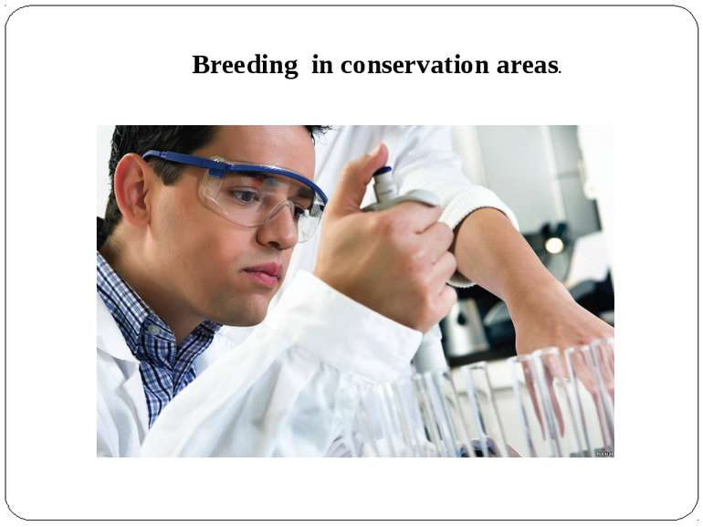 Breeding in conservation areas.