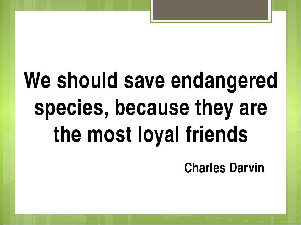 We should save endangered species, because they are the most loyal friends Ch...