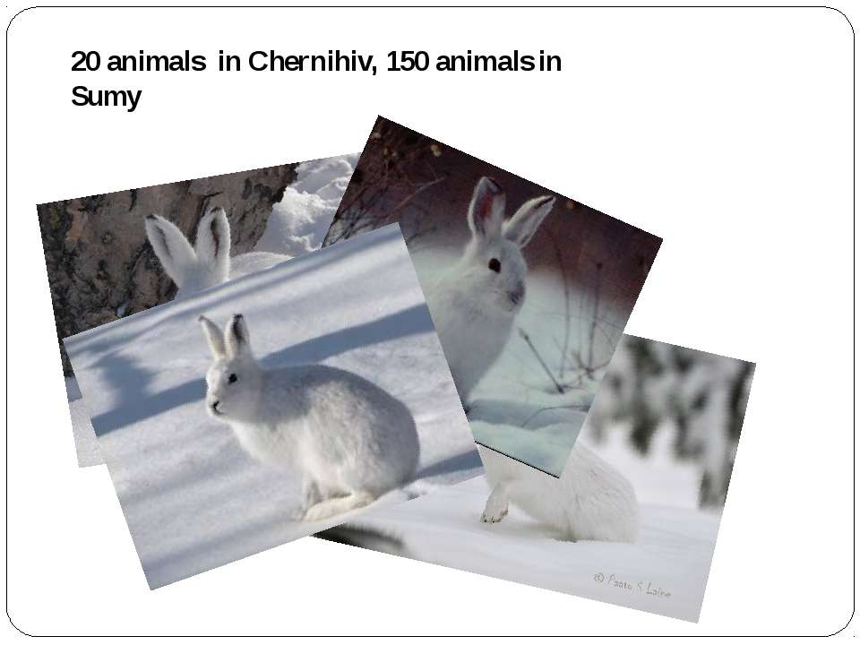 20 animals in Chernihiv, 150 animals in Sumy