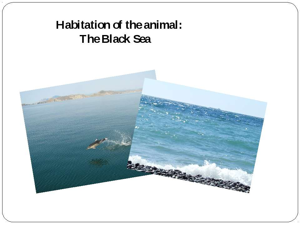 Habitation of the animal: The Black Sea
