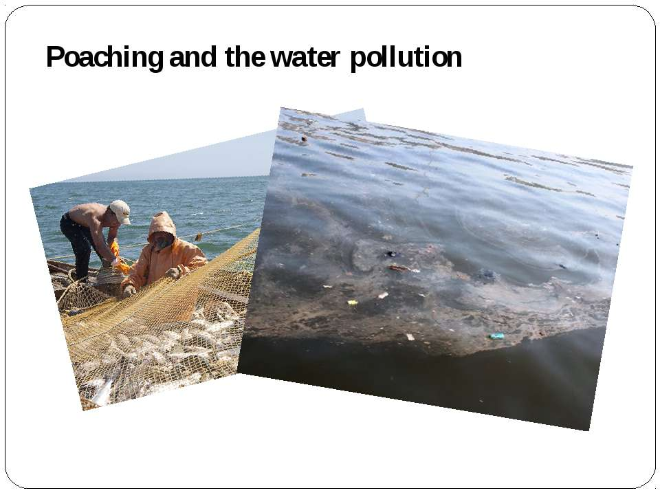 Poaching and the water pollution