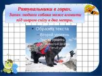 Рятувальники в горах. Запах людини собака може вловити під шаром снігу в два ...