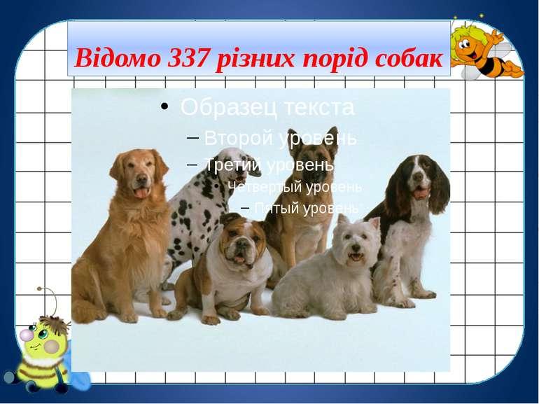 Відомо 337 різних порід собак