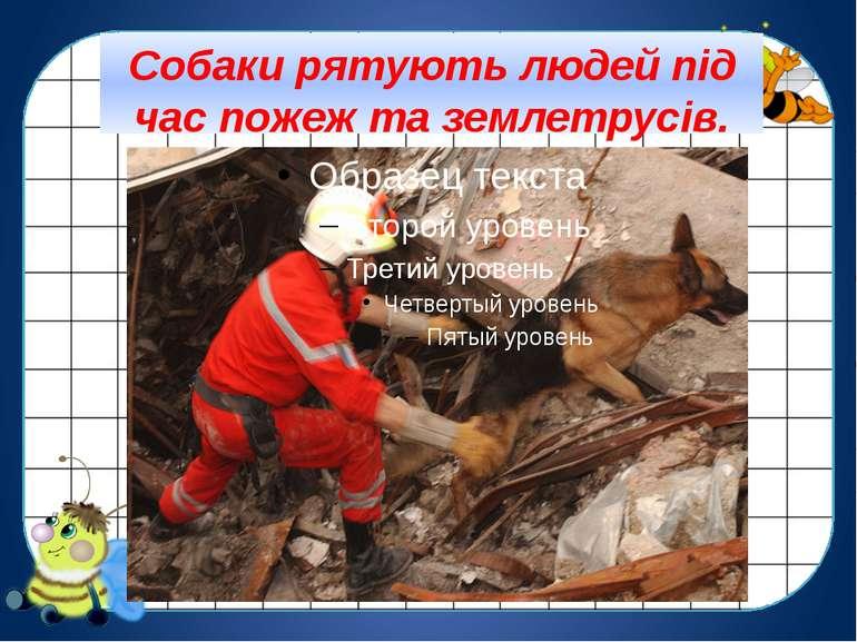 Собаки рятують людей під час пожеж та землетрусів.