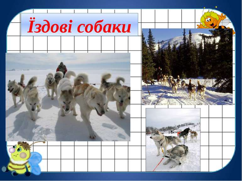 Їздові собаки