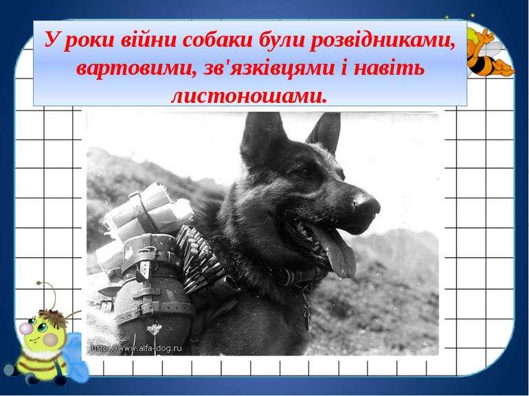 У роки війни собаки були розвідниками, вартовими, зв'язківцями і навіть листо...