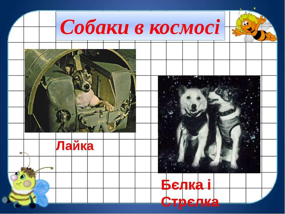 Лайка Бєлка і Стрєлка Собаки в космосі