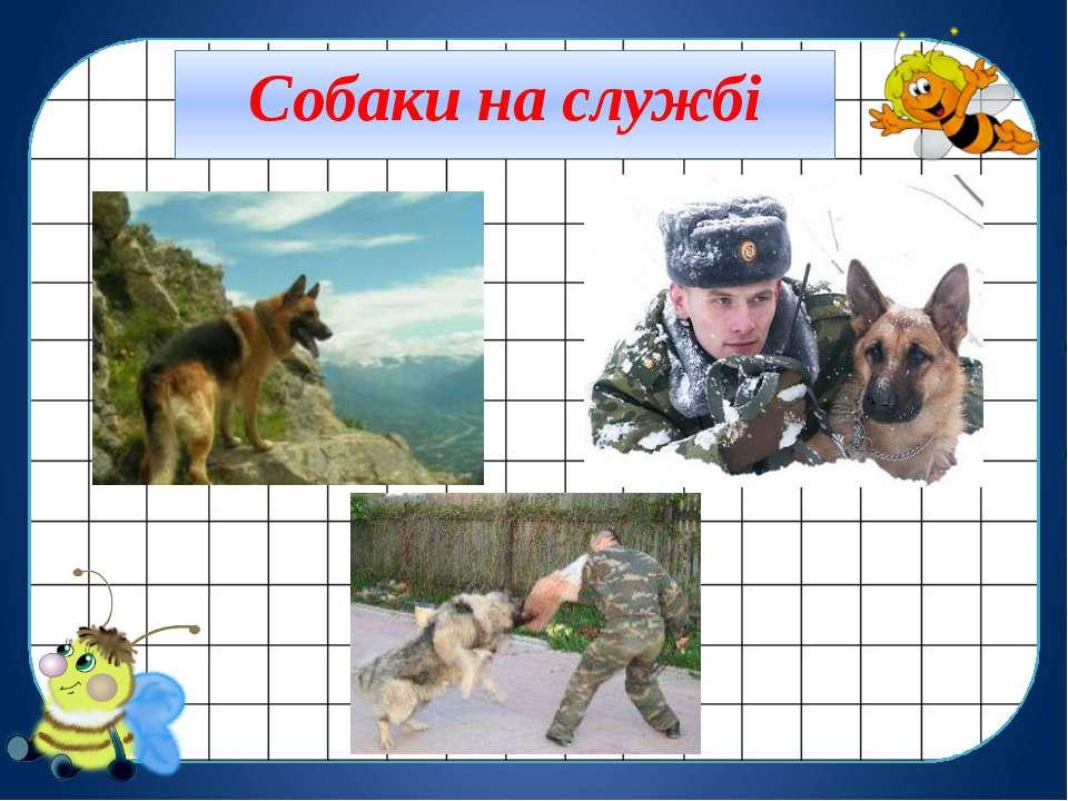 Собаки на службі