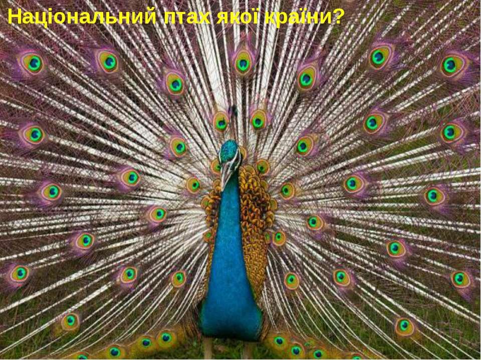 Національний птах 4. Національний птах якої країни?