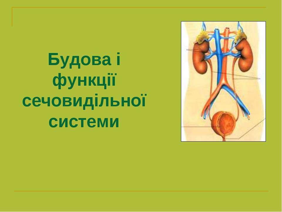 Будова і функції сечовидільної системи