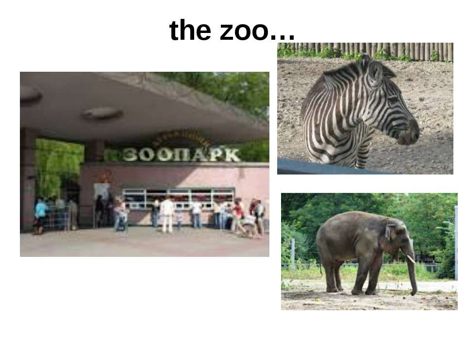 the zoo…