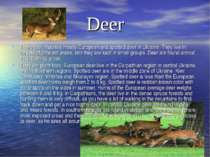 Deer There are inhabited mostly European and spotted deer in Ukraine. They li...