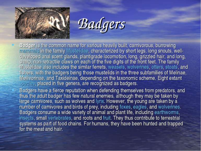 Badgers Badger is the common name for various heavily built, carnivorous, bur...