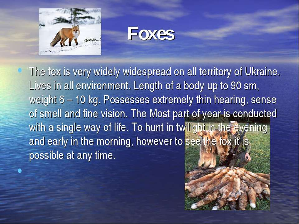Foxes The fox is very widely widespread on all territory of Ukraine. Lives in...