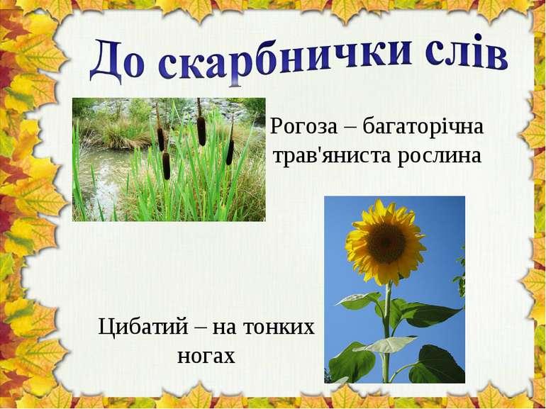 Рогоза – багаторічна трав'яниста рослина Цибатий – на тонких ногах