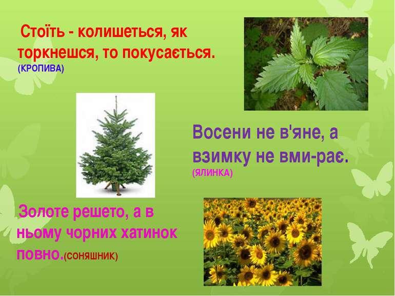 Стоїть - колишеться, як торкнешся, то покусається.(КРОПИВА) Восени не в'яне,...