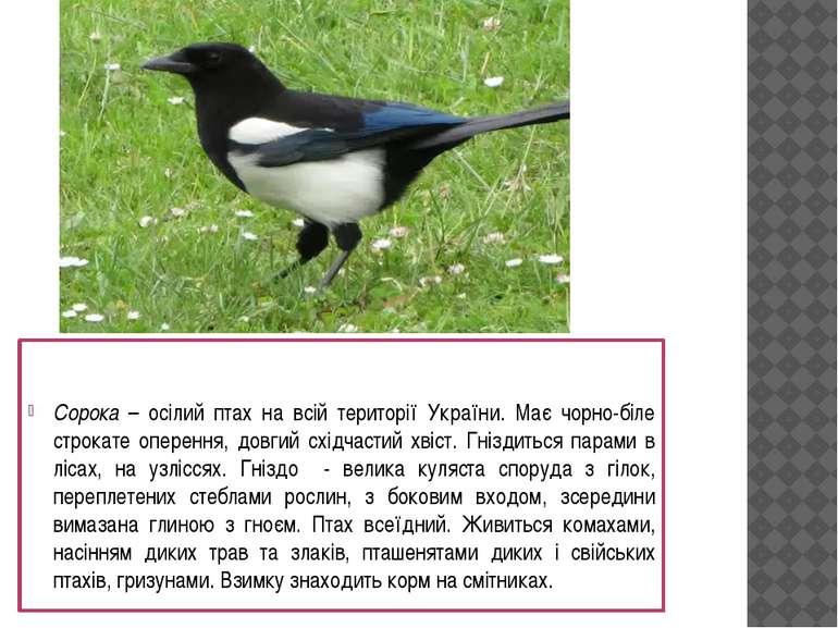 Сорока – осілий птах на всій території України. Має чорно-біле строкате опере...