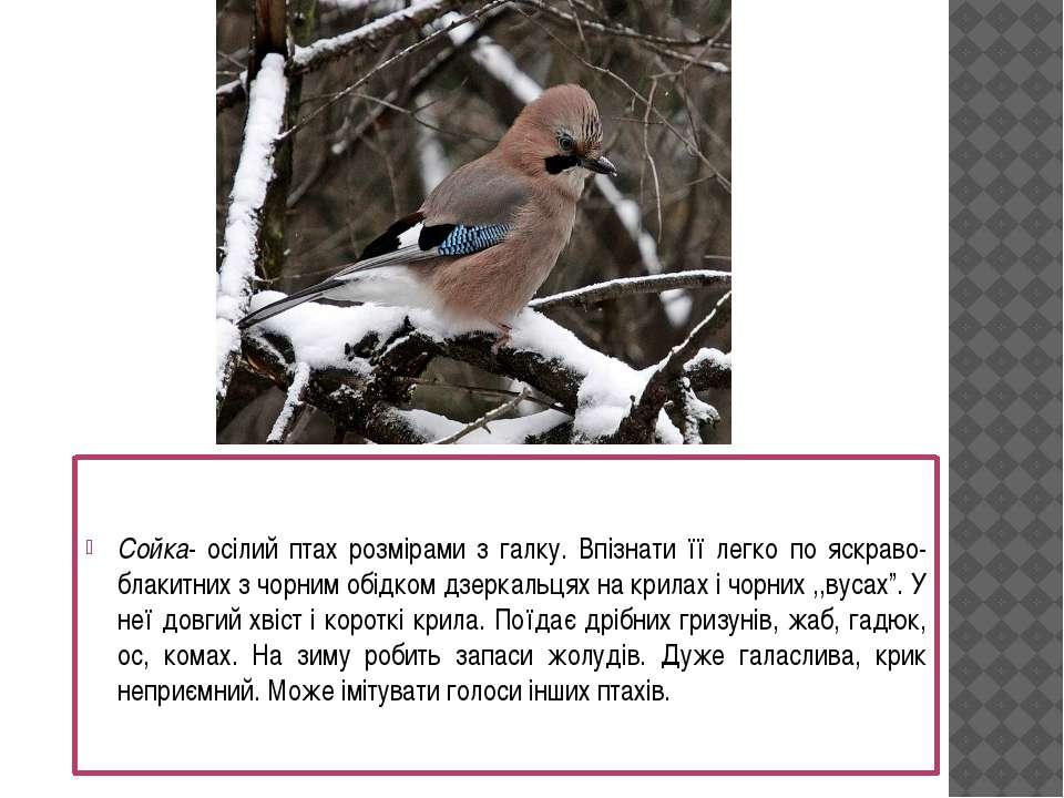 Сойка- осілий птах розмірами з галку. Впізнати її легко по яскраво-блакитних ...