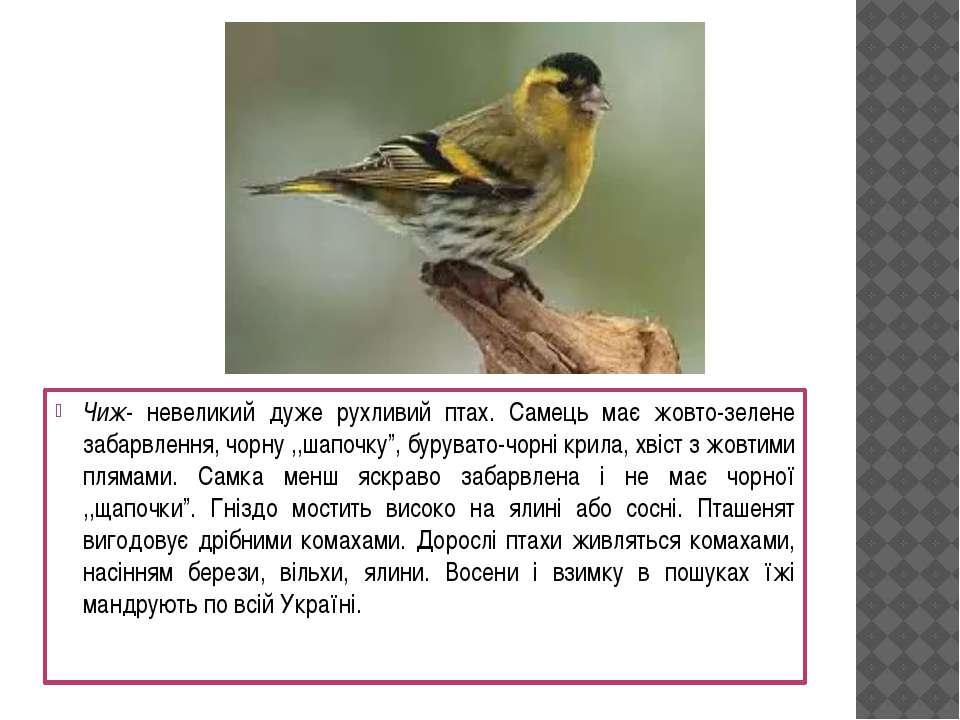 Чиж- невеликий дуже рухливий птах. Самець має жовто-зелене забарвлення, чорну...