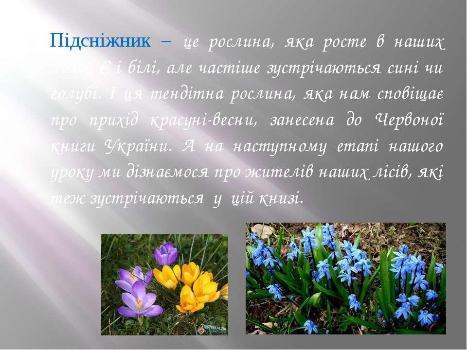 Підсніжник – це рослина, яка росте в наших лісах. Є і білі, але частіше зустр...