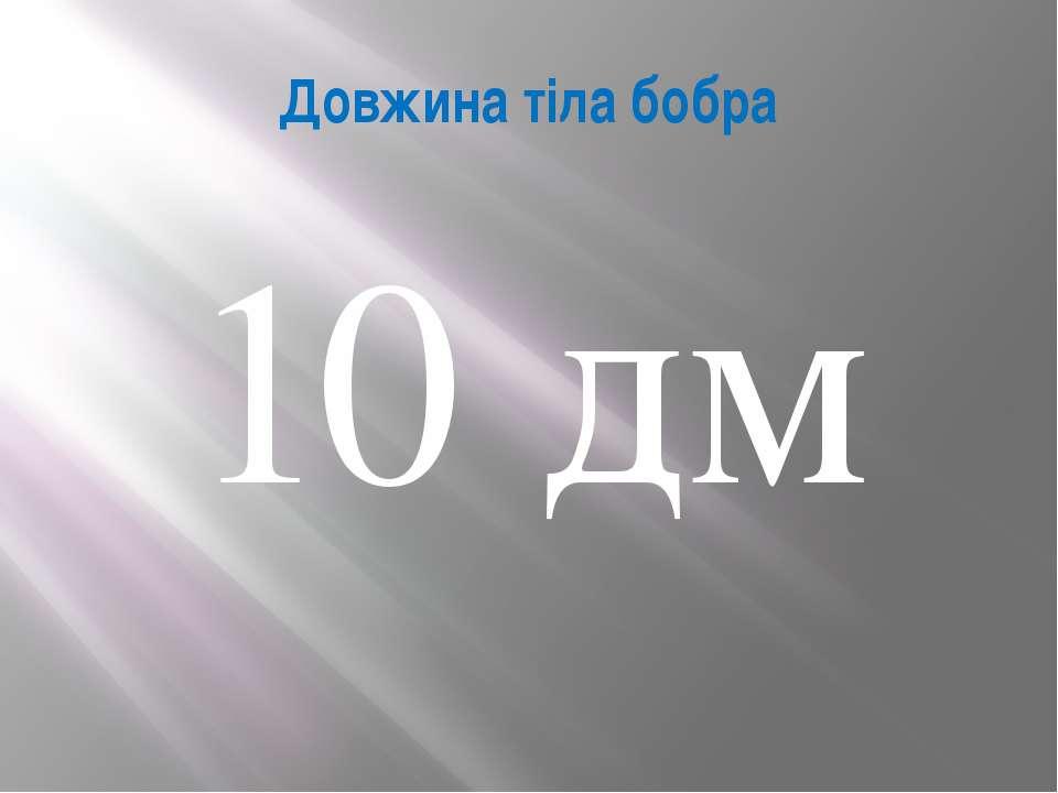 Довжина тіла бобра 10 дм