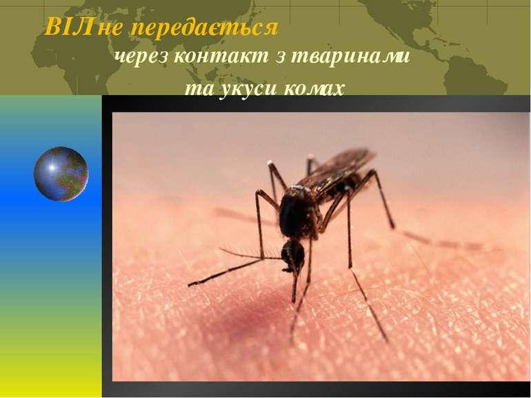 ВІЛ не передається через контакт з тваринами та укуси комах