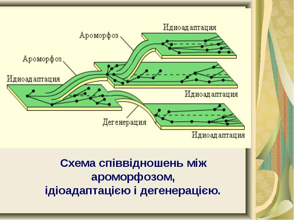 Схема співвідношень між ароморфозом, ідіоадаптацією і дегенерацією.