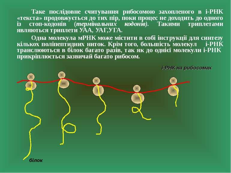 Таке послідовне считування рибосомою захопленого в і-РНК «текста» продовжуєть...