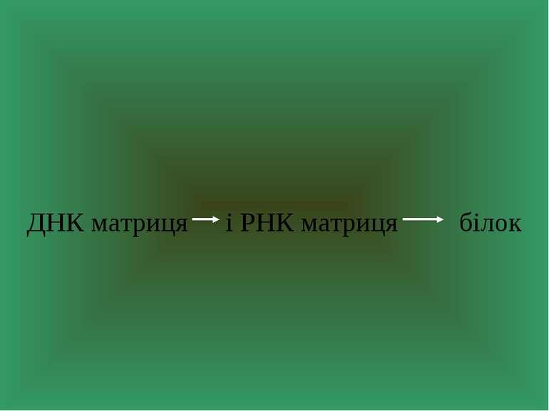 ДНК матриця і РНК матриця білок
