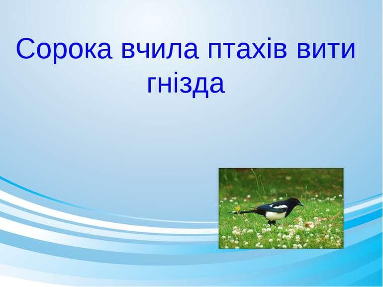 Сорока вчила птахів вити гнізда