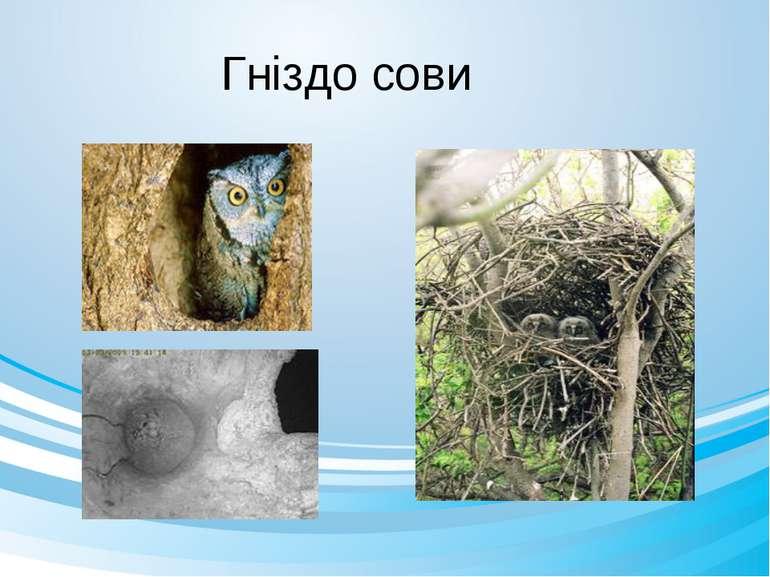Гніздо сови