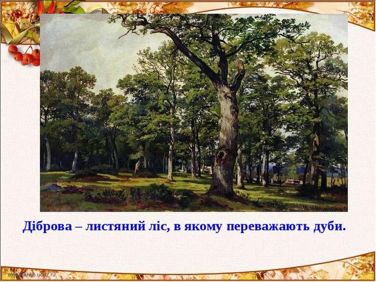 Діброва – листяний ліс, в якому переважають дуби.
