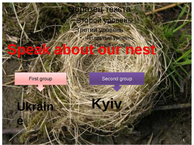 Speak about our nest First group Second group Ukraine Kyiv