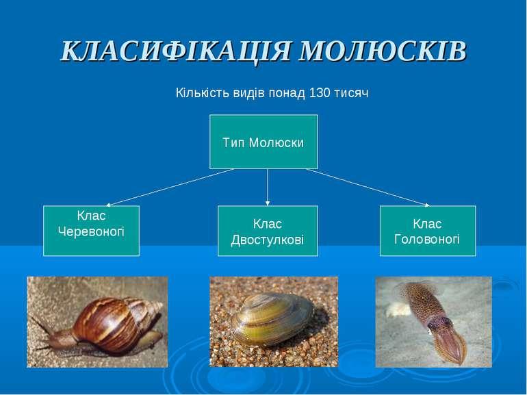 КЛАСИФІКАЦІЯ МОЛЮСКІВ Кількість видів понад 130 тисяч Тип Молюски Клас Черево...