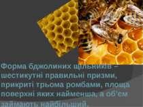 Форма бджолиних щільників – шестикутні правильні призми, прикриті трьома ромб...