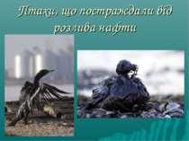 Птахи, що постраждали від розлива нафти