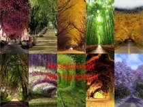 Незвіданий світ природи
