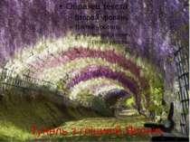 Тунель з гліциній.Японія