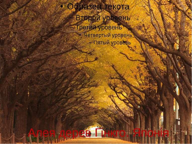 Алея дерев Гінкго. Японія