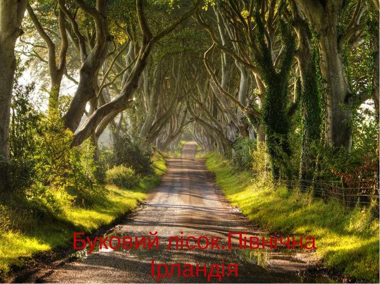 Буковий лісок.Північна Ірландія