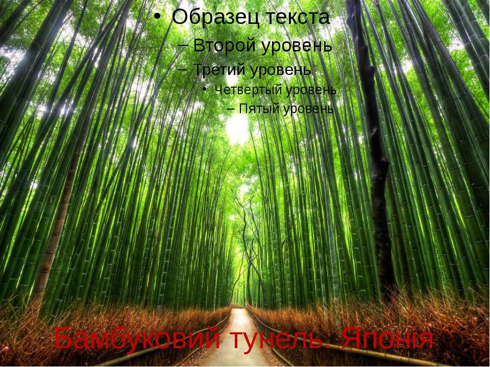 Бамбуковий тунель. Японія