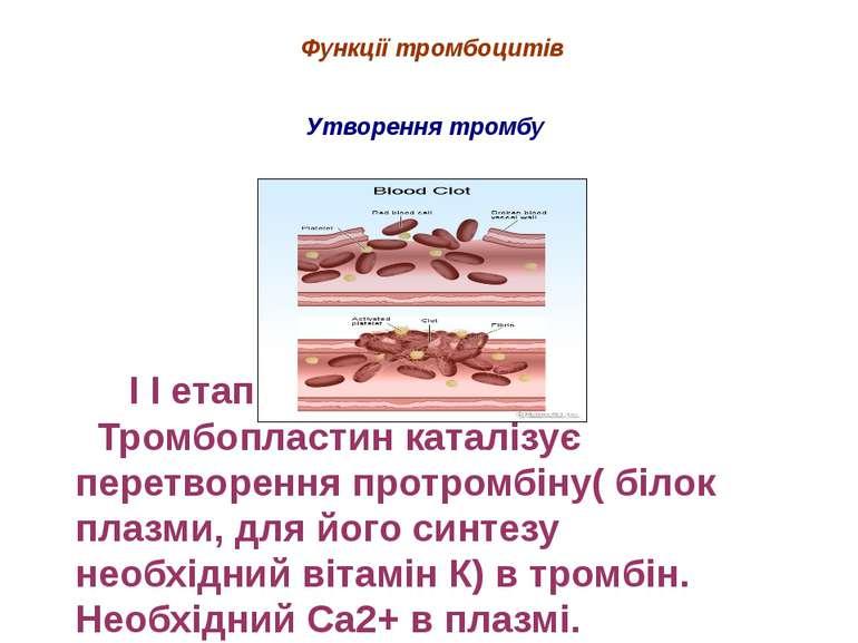 І І етап Тромбопластин каталізує перетворення протромбіну( білок плазми, для ...