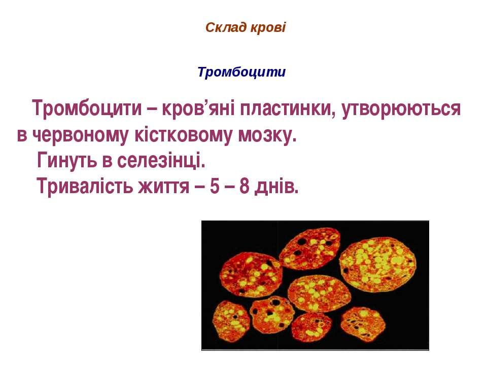 Склад крові Тромбоцити Тромбоцити – кров'яні пластинки, утворюються в червоно...