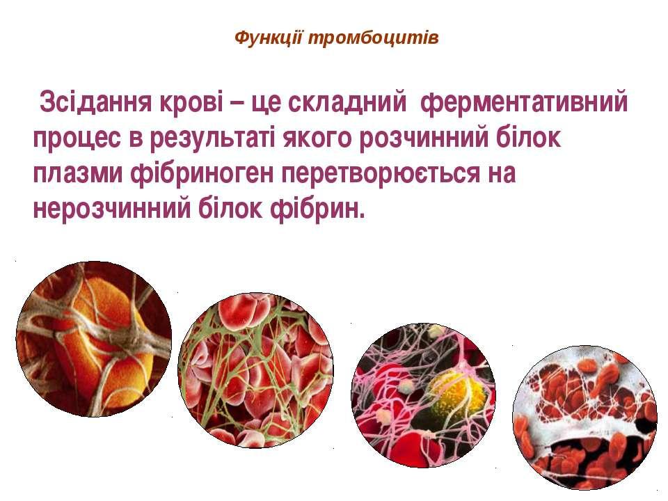Функції тромбоцитів Зсідання крові – це складний ферментативний процес в резу...